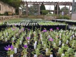 The Native Plant Sale is open to reservations only through Nov. 22. (Courtesy Lady Bird Wildflower Center)