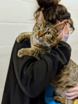 The new facility provides capacity for 525 animals. (Courtesy Harris County Pets)