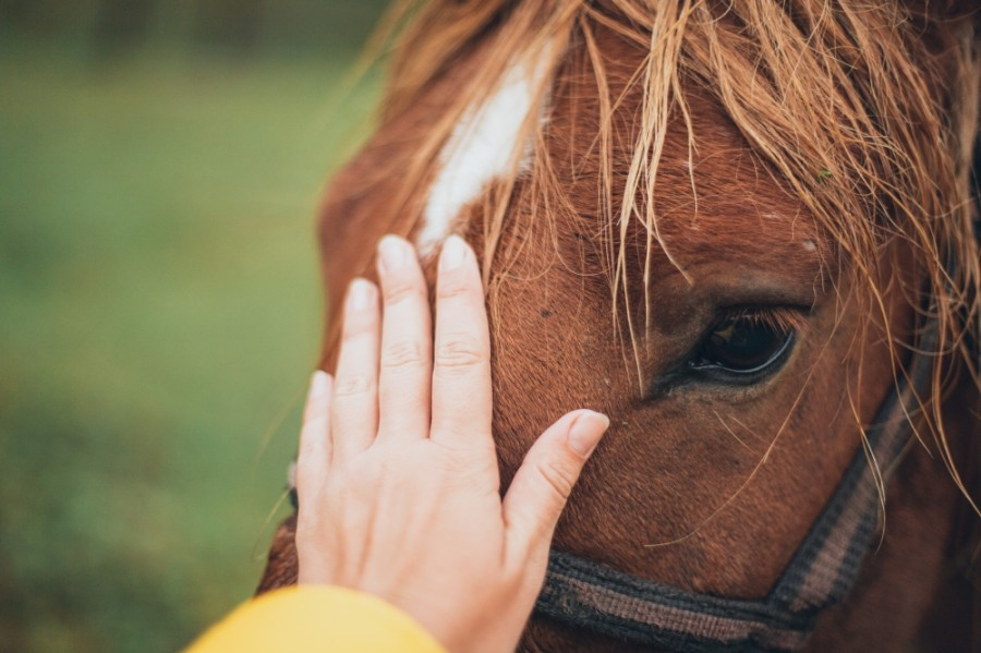 SIRE Therapeutic Horsemanship provides equine-assisted activities and therapies to adults and children with disabilities or developmental disorders. (Courtesy Pexels)