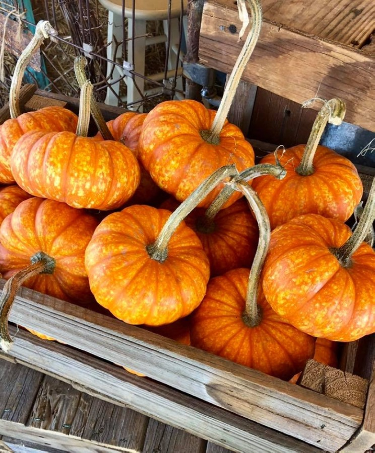 The family-owned farm is known for its pumpkin patch and corn maze. (Courtesy Hall's Pumpkin Farm)