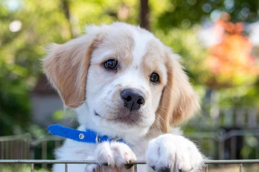 Take Me Home Pet Rescue helps people find their perfect pet. (Courtesy Take Me Home Pet Rescue)