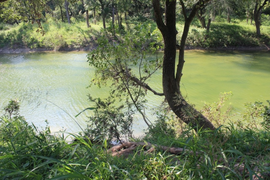 The TCEQ permit would have allowed Dripping Springs to dispose of treated wastewater into Onion Creek, which runs through Hays County and southern Travis County. (Olivia Aldridge/Community Impact Newspaper)