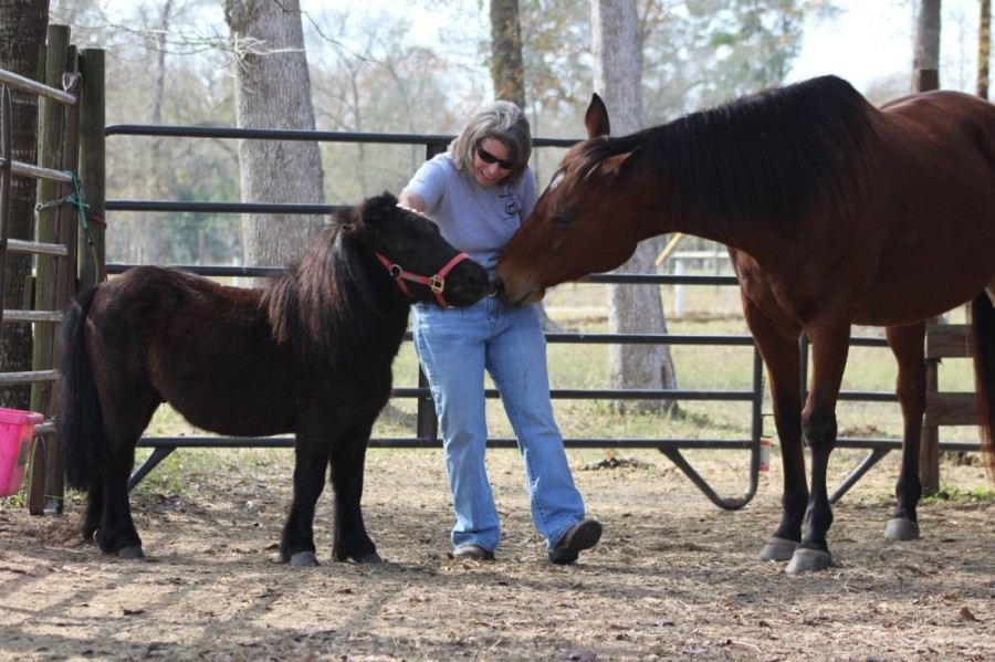Volunteers are also needed to work with animal-based charities. (Courtesy Henry's Home Horse Sanctuary)