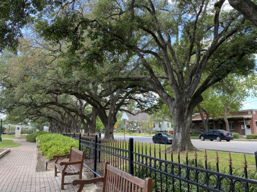 Over 18,500 total pounds of carbon dioxide have been absorbed by the native trees along Main Street in League City—equivalent to removing the air pollution caused by 20,800 miles of average passenger vehicle emissions. (Courtesy city of League City)