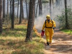 A prescribed burning on the W.G. Jones State Forest along FM 1488 is scheduled for Jan. 14-15, weather permitting. (Courtesy Texas A&M Forest Service)