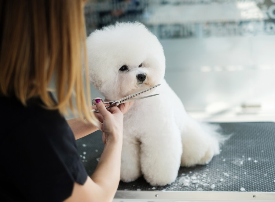At Rita's Grooming Spa, pet grooming is available for dogs and cats of all sizes using all-natural products and breed-standard grooming for each pet. (Courtesy Adobe Stock)