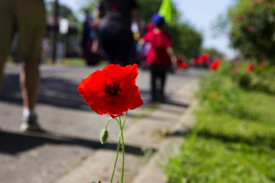 The Red Poppy Festival will likely be held in October as POPPtober Fest, after the fate of the annual event was discussed in a Feb. 9 Georgetown City Council workshop meeting. (Community Impact Newspaper staff)