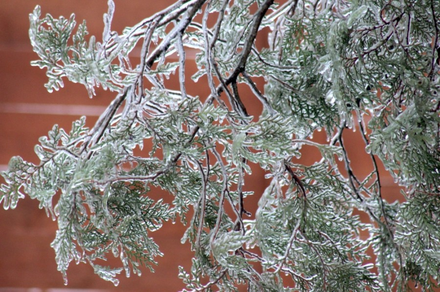 Trees were covered in ice throughout Austin after freezing rain fell the night of Feb. 16. (Jack Flagler/Community Impact Newspaper)