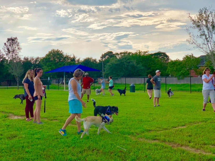 Friendswood Dog Park (Courtesy GS&F Advertising)