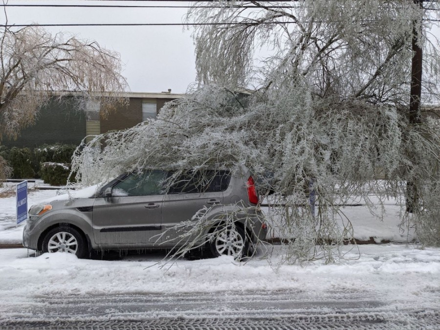 A tree with fallen branches has fallen on a car in North Austin in the midst of Winter Storm Uri.