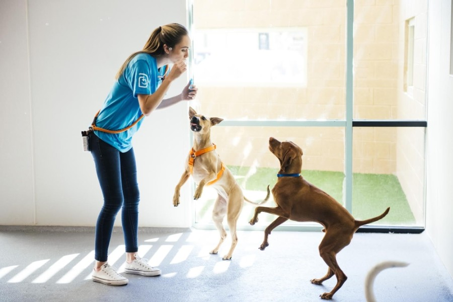 Dogtopia facilities feature spacious, supervised playrooms, off-leash environments and more. (Courtesy Dogtopia)