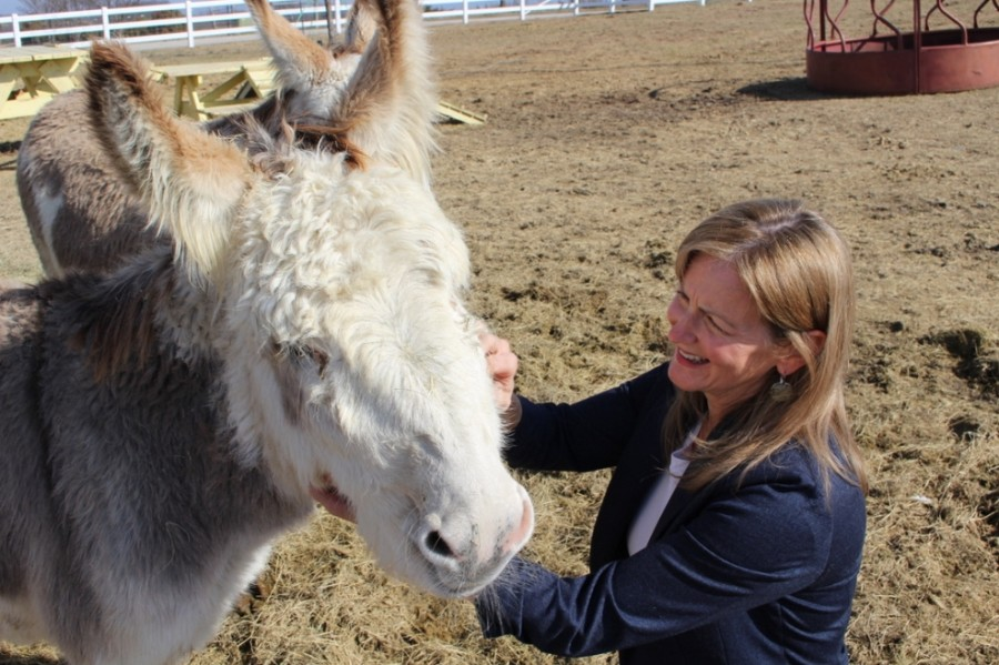 FarmHouse Fresh owner Shannon McLinden runs an animal rescue operation at the ranch. Among the ranch animals is her mischievous donkey, Arlo. (Francesca D'Annunzio/Community Impact Newspaper)