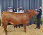 Cinco Ranch High School Senior Emma Jordan was the top auction winner during the Katy ISD FFA auction. (Courtesy Katy ISD)