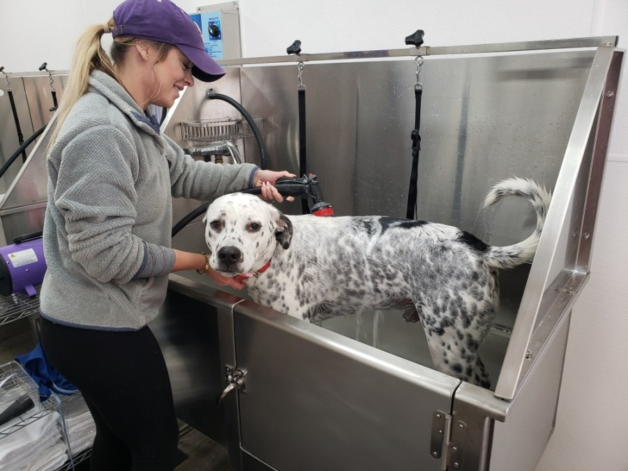 Brilliant Paws in Willis offers self-wash stations as well as full-service grooming. (Courtesy Brilliant Paws)