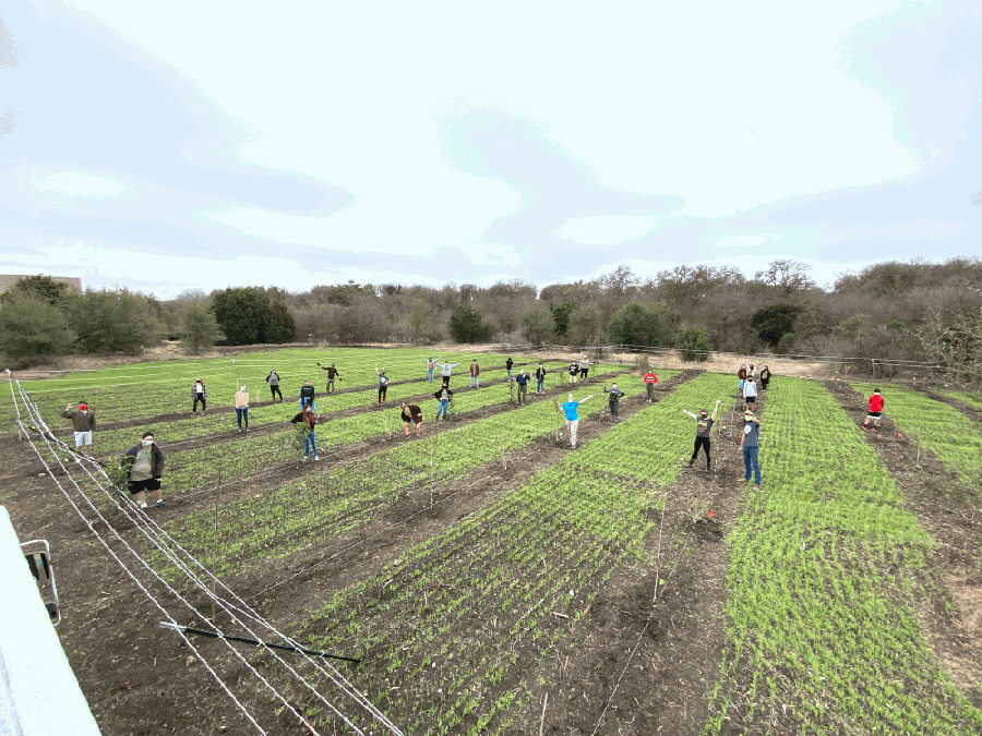 Urban Roots planted trees and vegetables at its new Southeast Austin farm in March. (Courtesy Urban Roots)