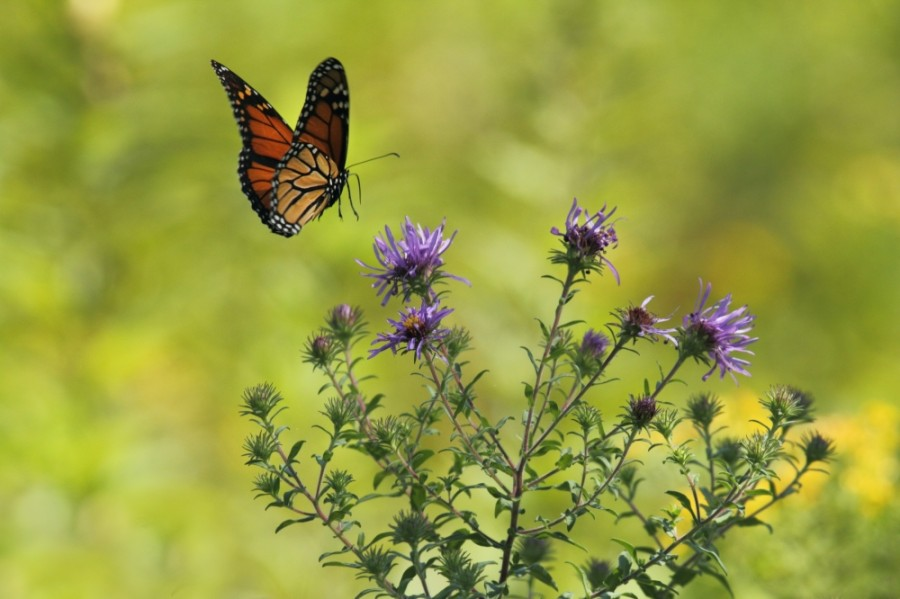 Events in April include a butterfly gardening workshop hosted by the Harris County Public Library System. (Courtesy Gary Bendig/Unsplash)