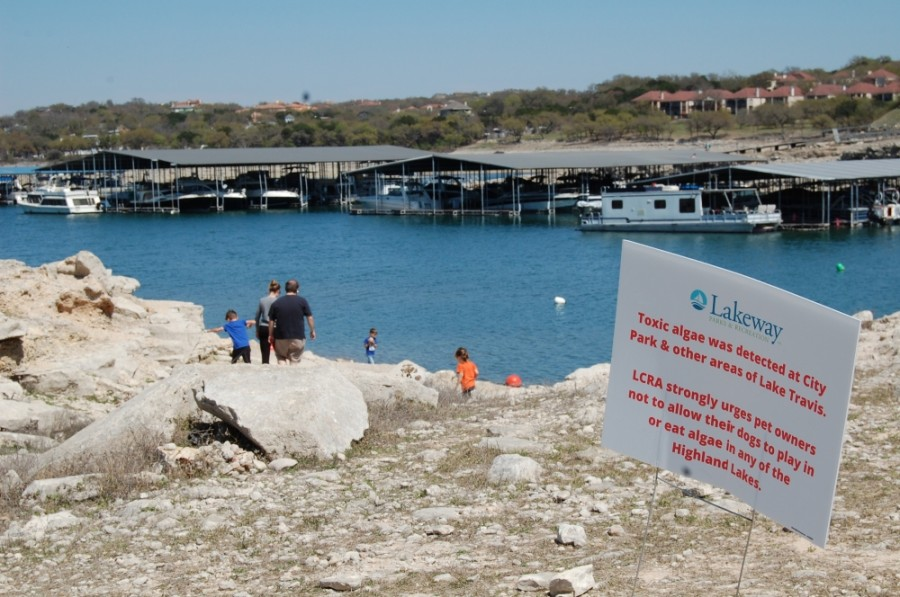 Harmful blue-green algae continues to be present within the Highland Lakes chain. (Greg Perliski/Community Impact Newspaper)