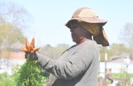 Plant It Forward's urban farms offer jobs, training and housing to refugees. (Hunter Marrow/Community Impact Newspaper)