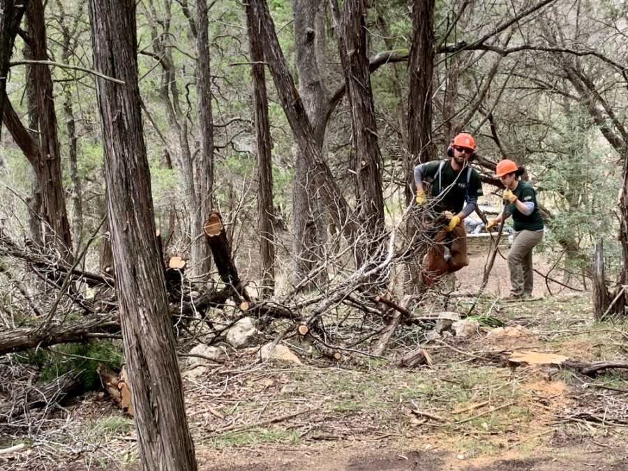 Work crews from the the Texas Conservation Corps remove fallen and dead tree debris from Hamilton Greenbelt. The team is under the direction of Lake Travis Fire and Rescue and the City of Lakeway. (Greg Perliski/Community Impact Newspaper)