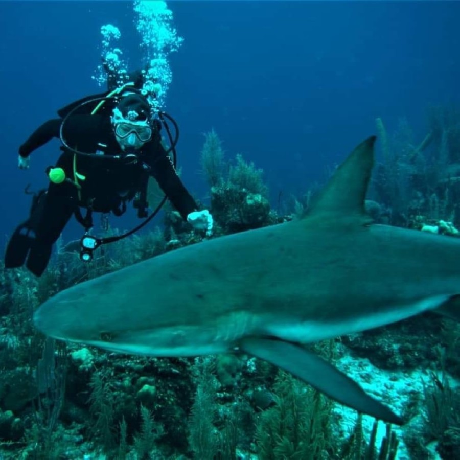 Woodlands Dive Center excursions can bring divers face-to-face with a variety of undersea life. (Courtesy Woodlands Dive Center)