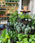 Located at 26303 Preston Ave., Ste. C, Spring, Wet My Plant will offer a wide selection of tropical plants, cacti, succulents and more. (Courtesy Wet My Plant)