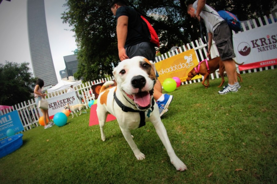 The annual Puppies for Breakfast event offers dog lovers an opportunity to bring their pet to an outdoor party with local vendors and food trucks. (Courtesy Puppies for Breakfast)