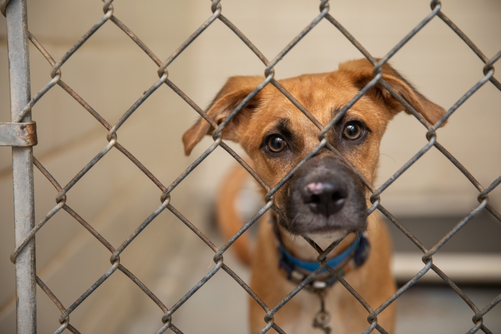 """Texas was determined a """"top-priority"""" state by the advocacy group Best Friends Animal Society. (Courtesy Best Friends Animal Society)"""