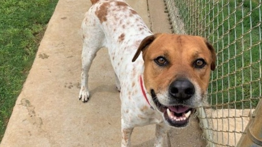 The Plano Animal Shelter is operating normally and welcoming all walk-in visitors during regular hours. (Courtesy Plano Animal Services)