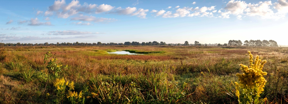 Katy Prairie Conservancy's Indiangrass Preserve features restored wetlands. (Courtesy Don Pine)