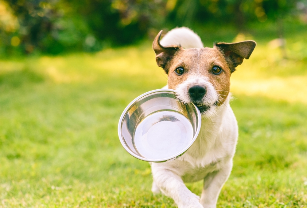 Dog with bowl in its mouth