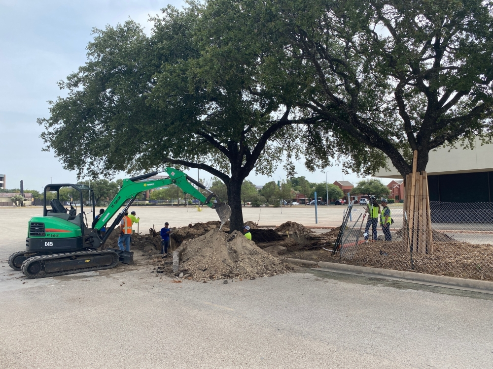 A three-story tree was moved on ACC's Highland's campus. (Courtesy ACC)