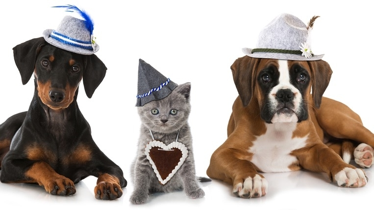 Barktoberfest, an event revolving around dogs, will take place on Oct. 9. (Courtesy Bay Area Pet Adoptions)