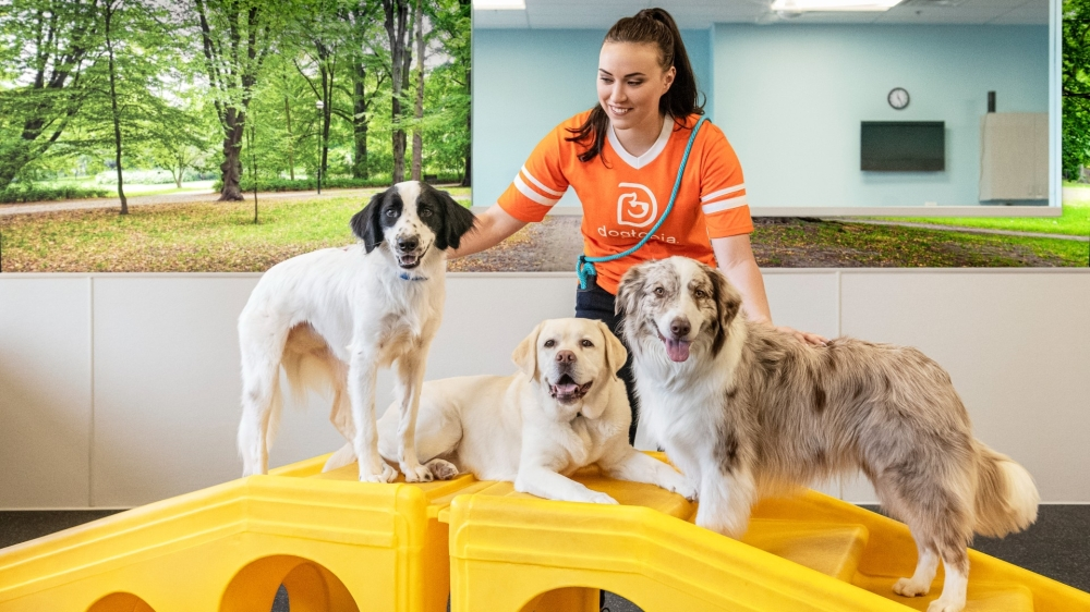 Dogtopia offers day care, boarding and a spa, and the business is coming to Southlake later this month. (Courtesy Dogtopia)