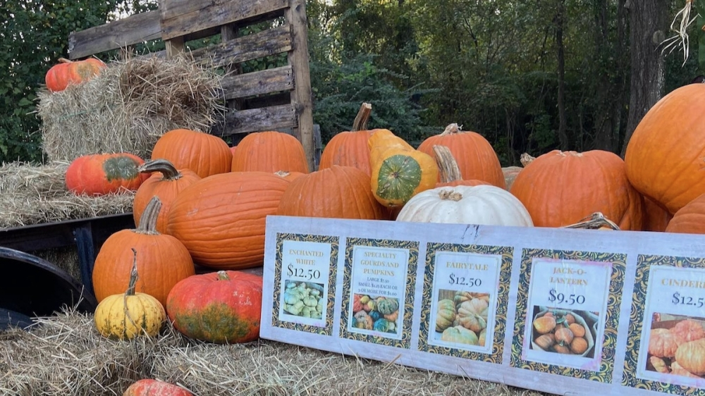 Beehive Boutique and Garden will host a fall festival on Oct. 9 in celebration of its one-year anniversary. (Courtesy Kristy Lund)