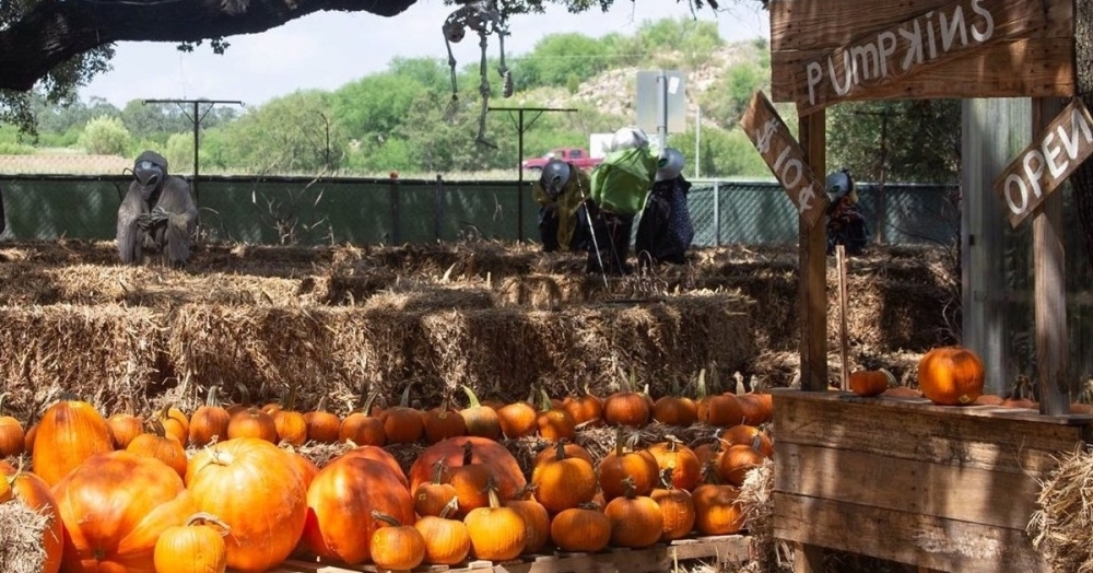 Milberger's Nursery is hosting a pet-friendly pumpkin patch during business hours throughout October. Several North Side churches and businesses have pumpkin patches open to the public. (Courtesy Milberger's Nursery)
