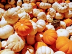 Blue Monkey is holding its annual pumpkin patch plus a fall festival on Oct. 16. (Courtesy Blue Monkey)