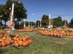The Cooper Trooper Pumpkin Patch returns Oct. 16. (Wendy Sturges/Community Impact Newspaper)