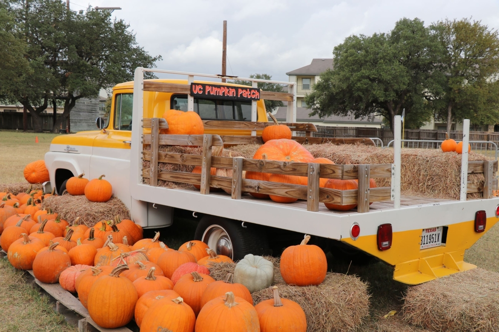 The Universal City Pumpkin Patch opened for the 2021 season and offers family activities on the weekends. (Courtesy Universal City)