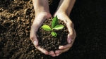 Local organizations will share about conservation efforts and native plants, and 200 trees will be given away on a first-come, first-served basis. (Courtesy Adobe Stock)