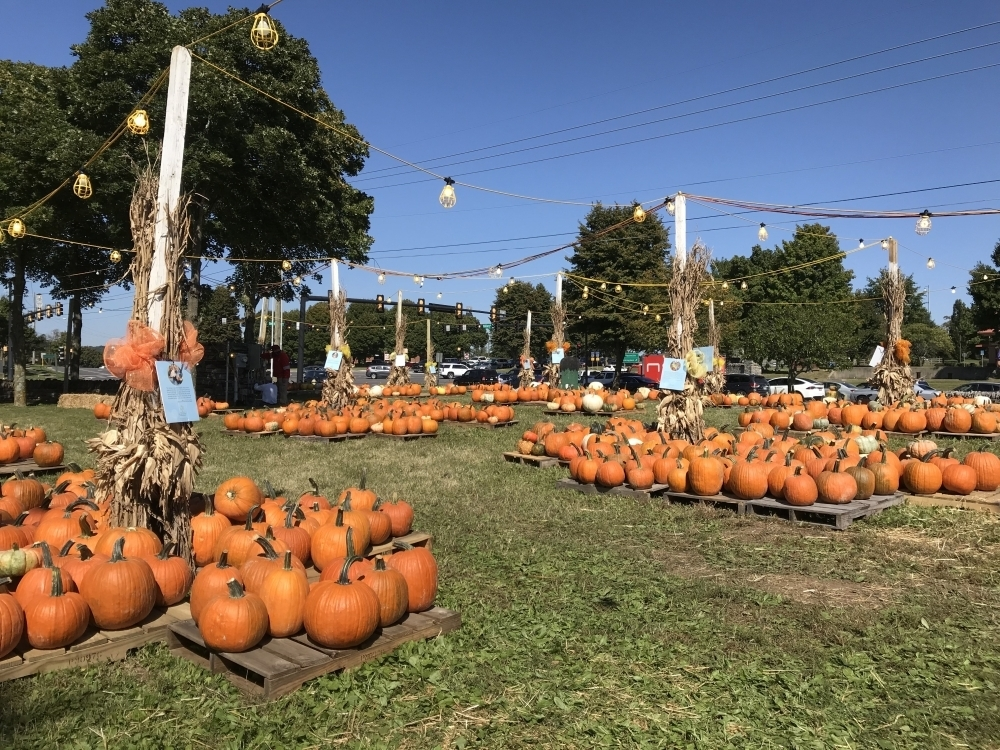 16 fall events to check out in Franklin, Brentwood; Westhaven Golf Club reopens following renovations and more top area news