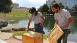 two beekeepers opening a hive