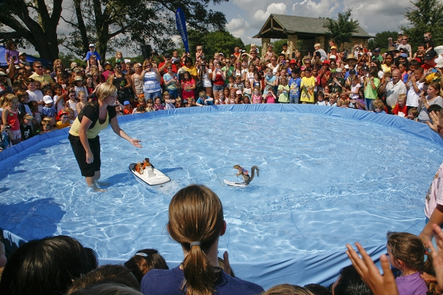 Twiggy the water-skiing squirrel will return to Bridgeland's Nature Fest this weekend. (Courtesy The Howard Hughes Corp.)
