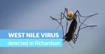 City health officials decided to spray a portion of Richardson after a mosquito trap tested positive for the West Nile virus, according to a city release. (Courtesy Adobe Stock)